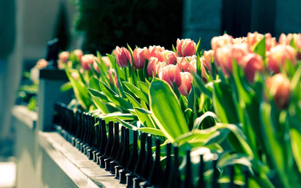 Garden arrangements demo
